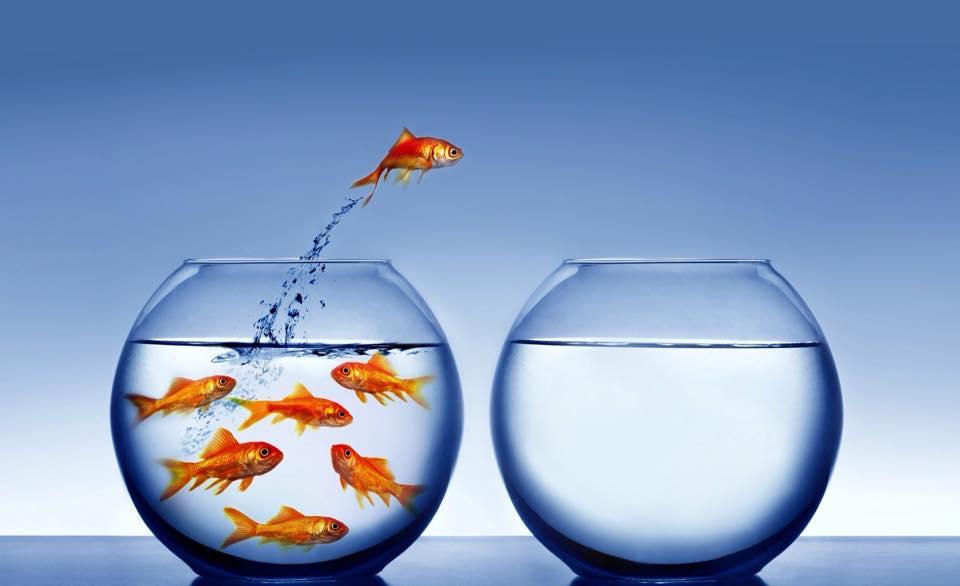 fish start smart